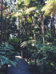 Royal Botanical Gardens Melbourne Rainforest