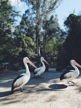 Healesville Sanctuary Melbourne