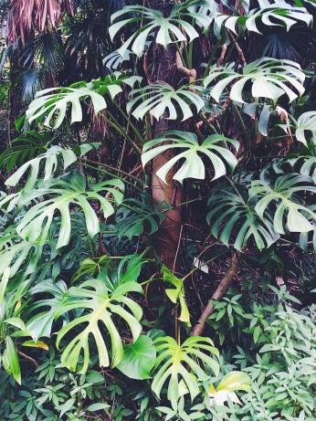 Botanic gardens Adelaide