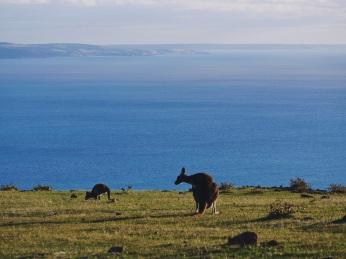 South Australia Fleurieu Peninsula