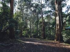 Olinda Falls Dandenong Melbourne