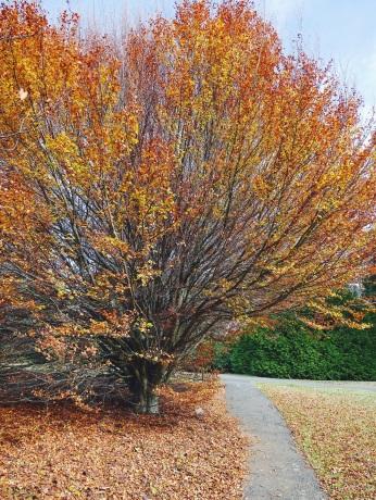 Dandenong Gardens Melbourne