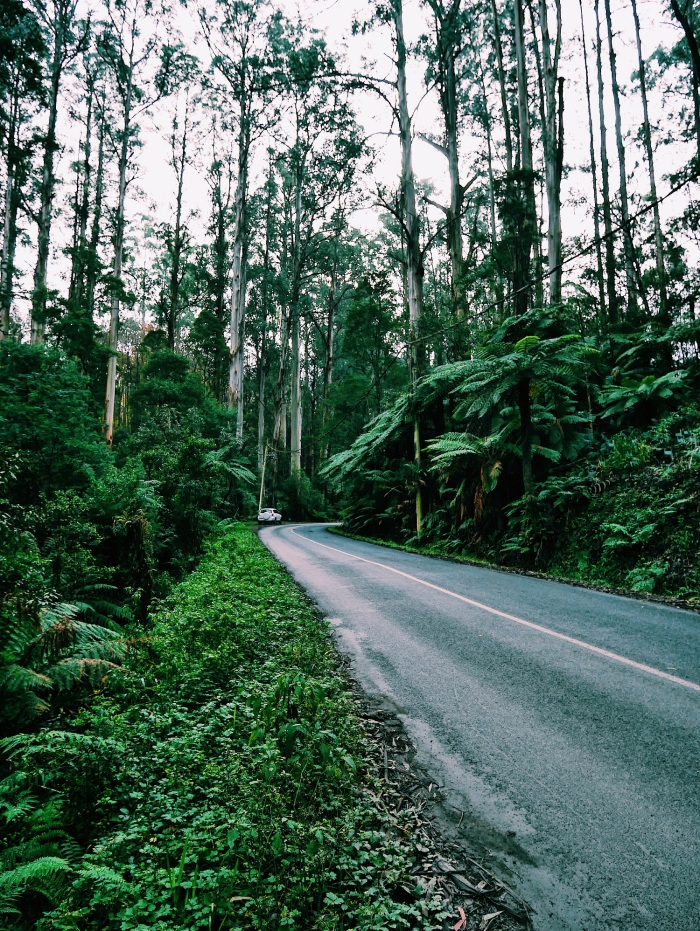 Dandenong Melbourne Hiking